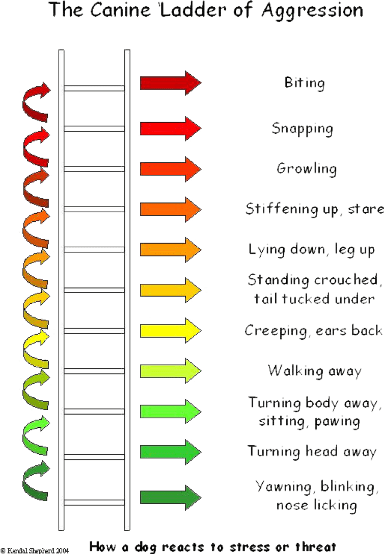 Chart of Dog Aggression