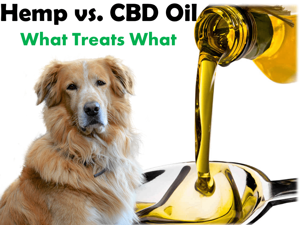 Hemp vs cbd feature image