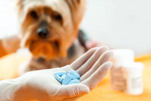 canine epilepsy image