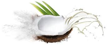 MCT coconut image 3