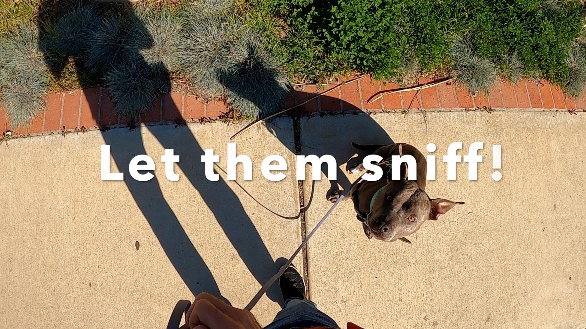 a lesson on loose leash walking